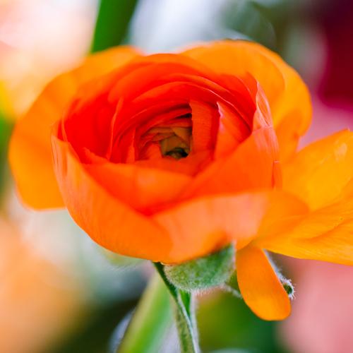 Fleurs d'une salle de réception par Agence Sabeha Brunet, Wedding Planner pour mariage et évènements haut de gamme - Arcachon, Bordeaux, Saint-Emilion